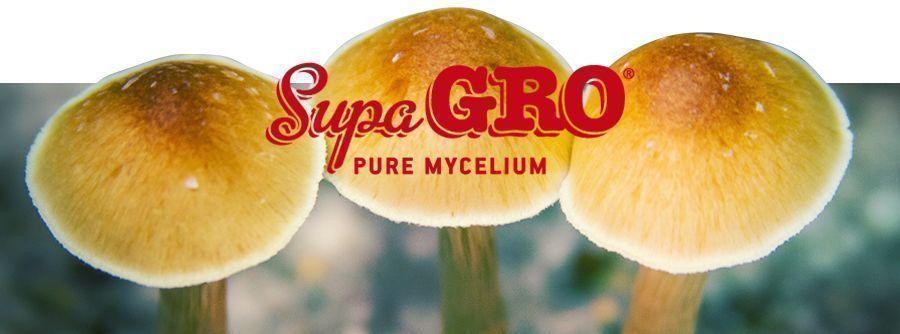 Supa Gro Kits
