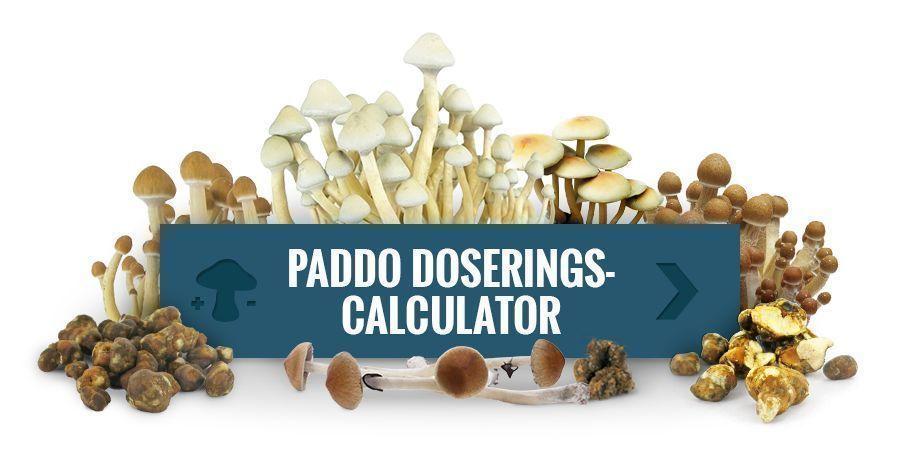 Gebruik Onze Paddo Doseringscalculator
