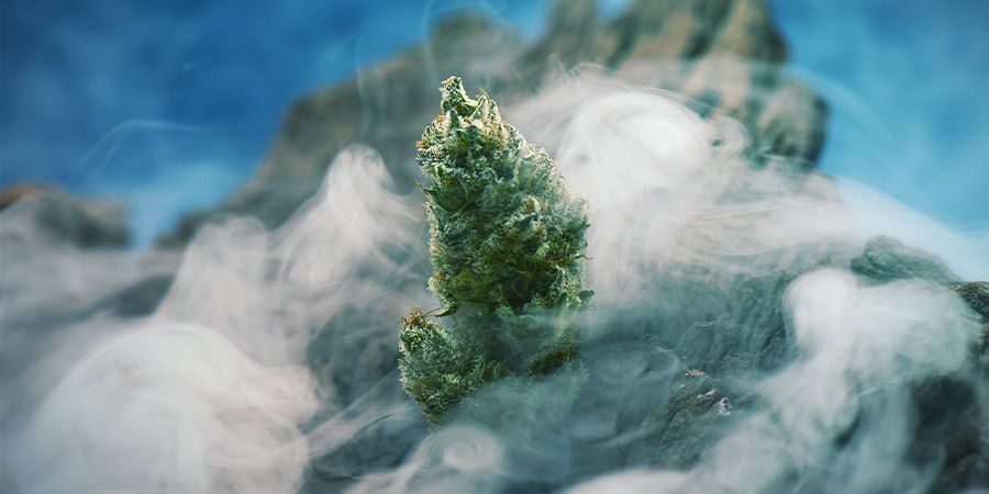 OG Kush — A Cannabis Legend Worth Growing