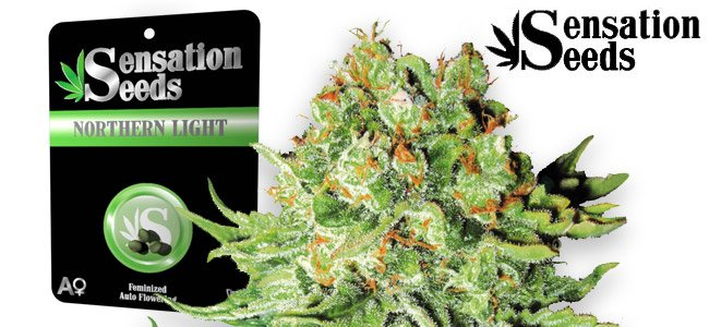 Northern Light Auto Sensation