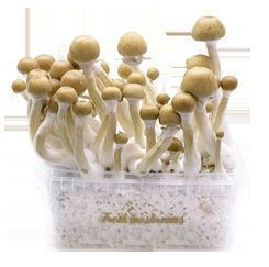 Fresh Mushrooms Manual