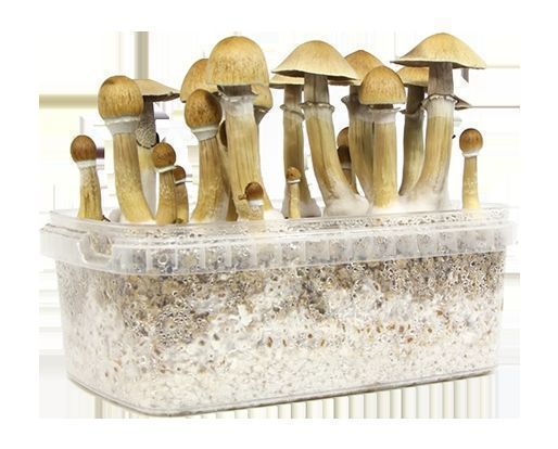 Zamnesia Grow Kits Manual
