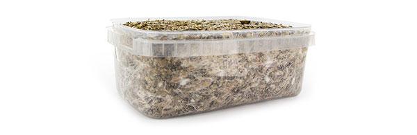 Mycelium kit