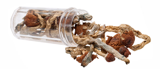 Dried magic mushroom
