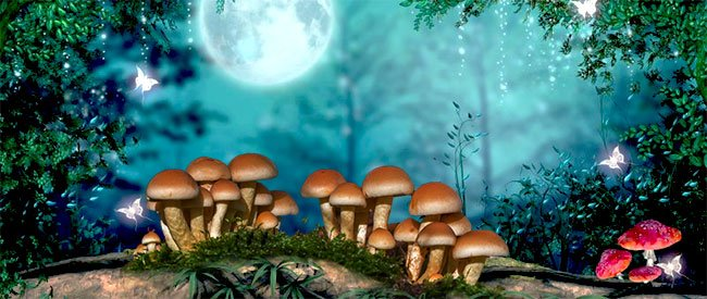 Magic mushrooms in forest