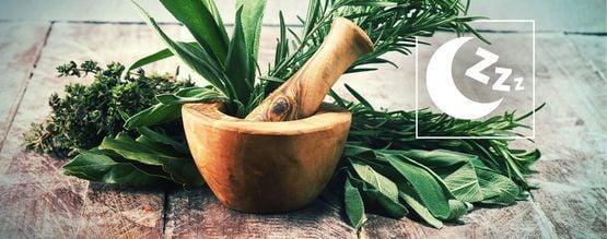 Best Natural Herbs to Promote Sleep