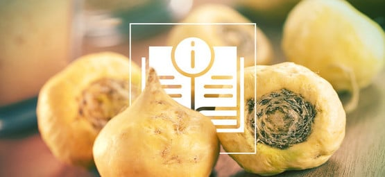 Maca: Everything You Need To Know