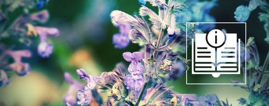 Catnip: Everything You Need To Know