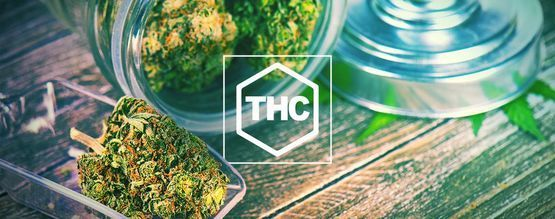 Everything You Need To Know About THC