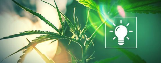 Choosing The Right Light For Your Grow-Op