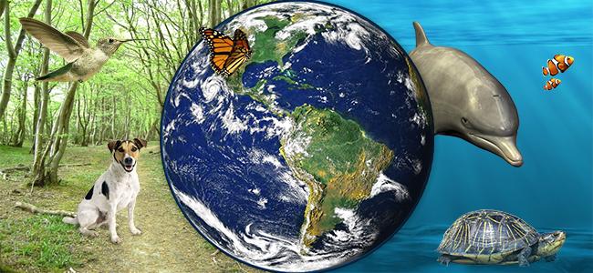 Biodiversity cannabis