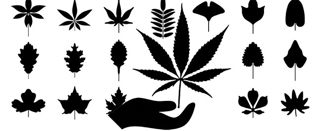 Bostuinsysteem cannabis