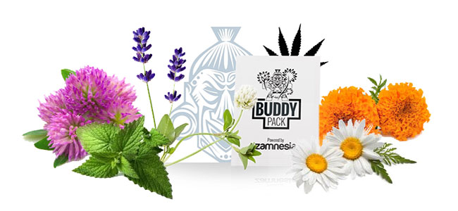 Companion buddy packs cannabis