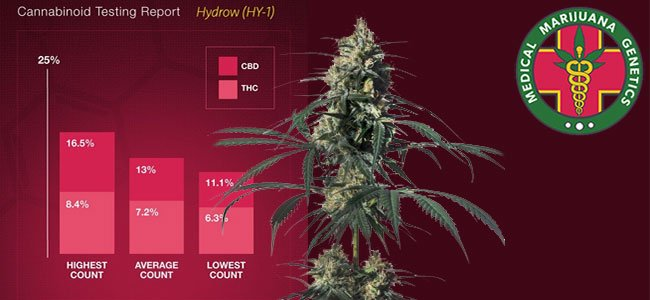 Hyidrow medical marijuana genetics