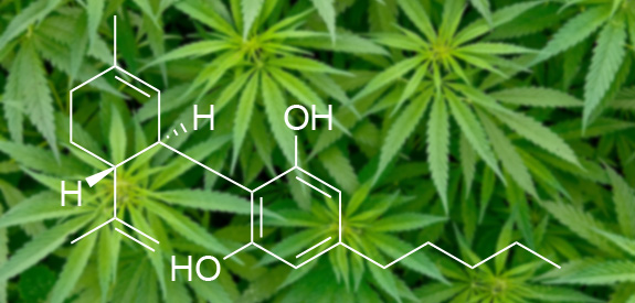 What is CBD? – CBDHolland