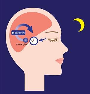 Melatonina ciclo luce-buio