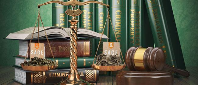 Salvia legality