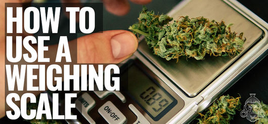 How To Use A Weighing Scale For Cannabis
