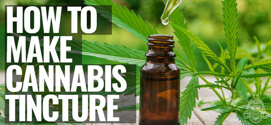 How To Make Cannabis Tincture – Stoney By Zamnesia