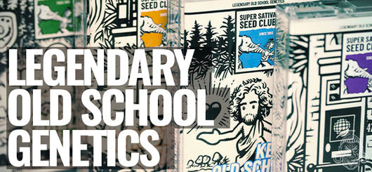 Oldskool Cannabis Genetik | Super Sativa Seed Club