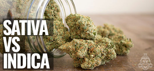 Sativa vs Indica | What Is The Difference?