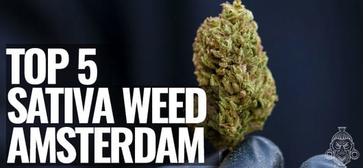 Top 5 Sativa Weed of Amsterdam | Amsterdam Coffeeshop Visits 2020