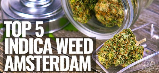 Top 5 Indica-Weed in Amsterdam | Amsterdam Coffeeshop Visits 2020