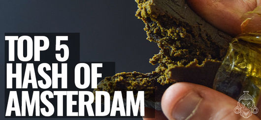 Top 5 Hash of Amsterdam | Amsterdam Coffeeshop Visits 2020