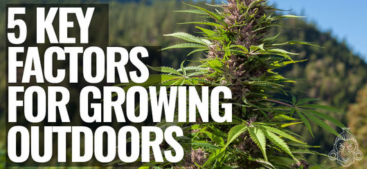 5 Key Factors For Growing Cannabis Outdoors