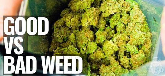 Good VS Bad Weed | How To Tell The Difference