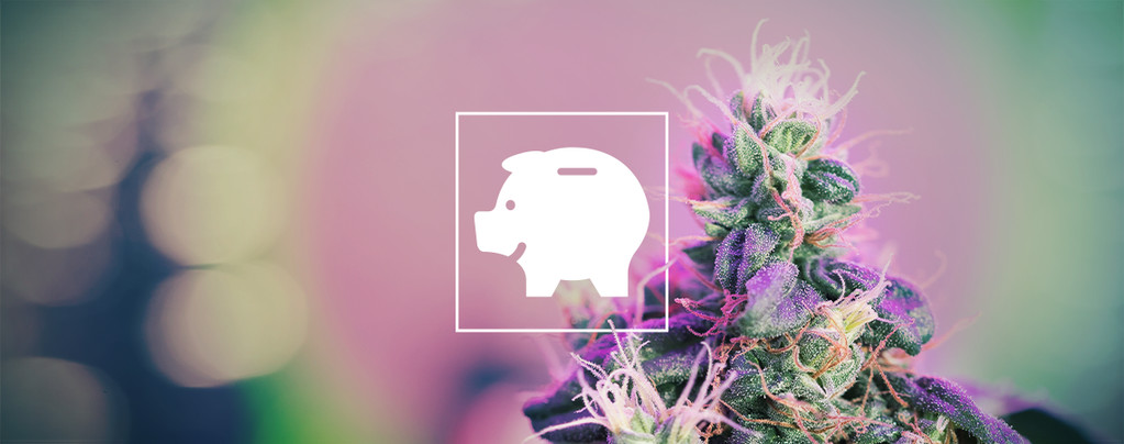 How To Grow Weed On A Budget