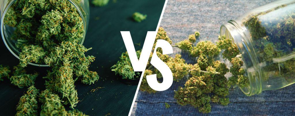 Indoor Vs Outdoor Weed: Which Is Better?