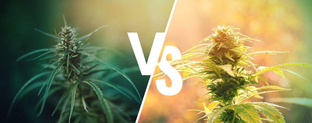 Der Unterschied Zwischen Hanf Und Cannabis