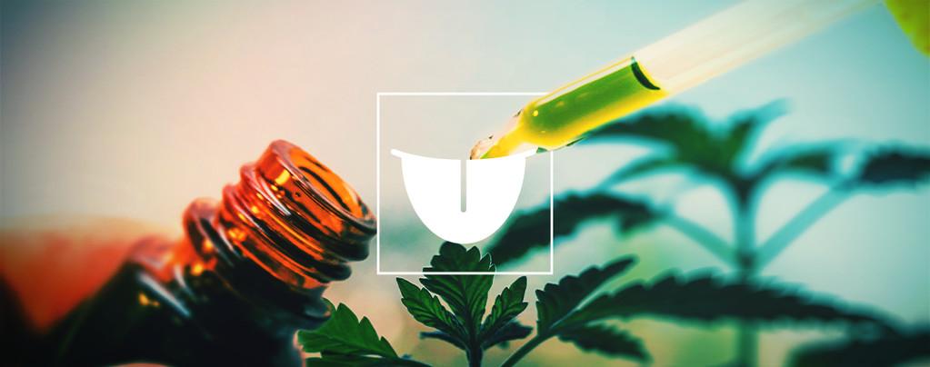 Perché La Tintura Di Cannabis Sublinguale È Il Meglio