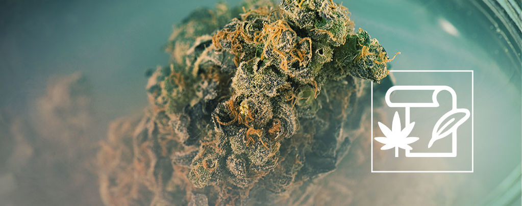 Skunk Cannabis