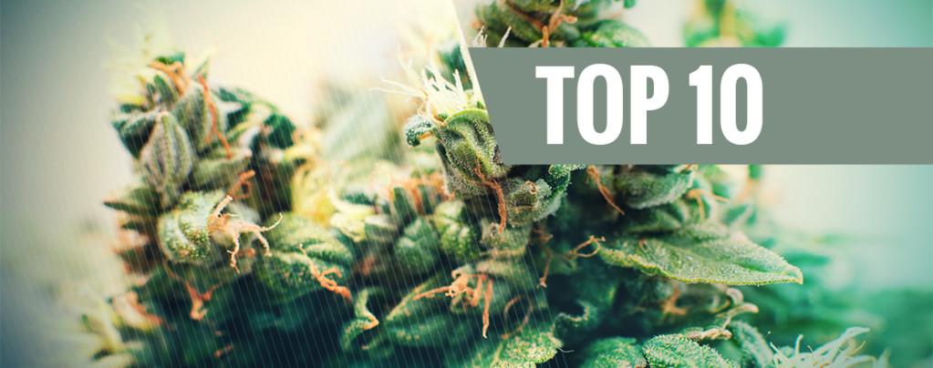 La Top 10 delle varietà di Cannabis autofiorente