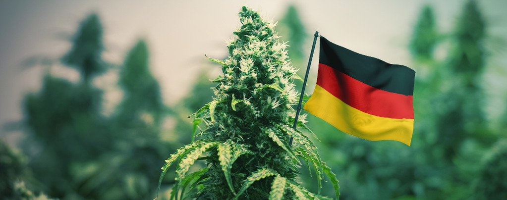 The Best Outdoor Cannabis Strains To Grow In German
