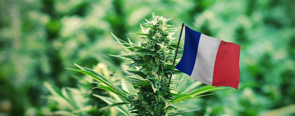 Image result for Cannabis Laws in france
