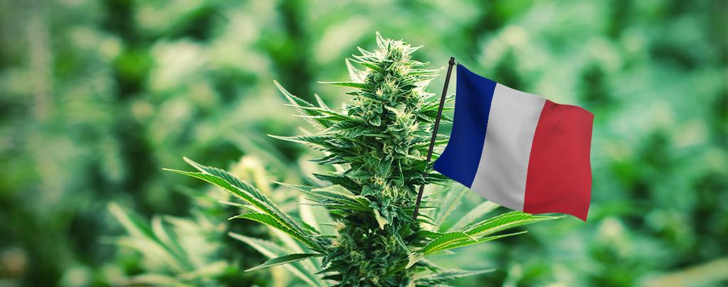Besten Cannabissorten in Frankreich
