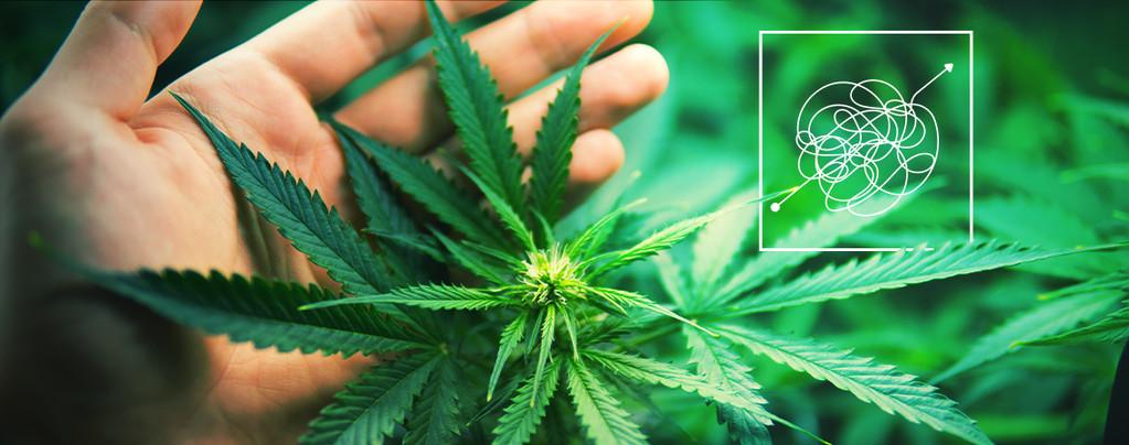 Geld Cannabis