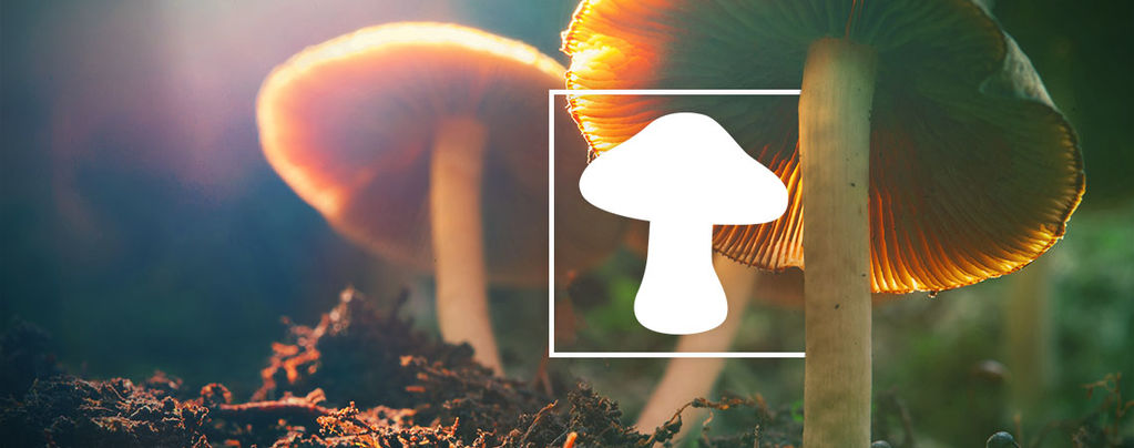 Types Of Magic Mushrooms