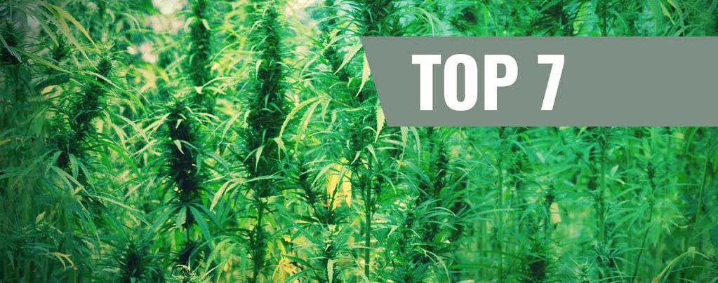 Varietà di Cannabis Più Leggendarie