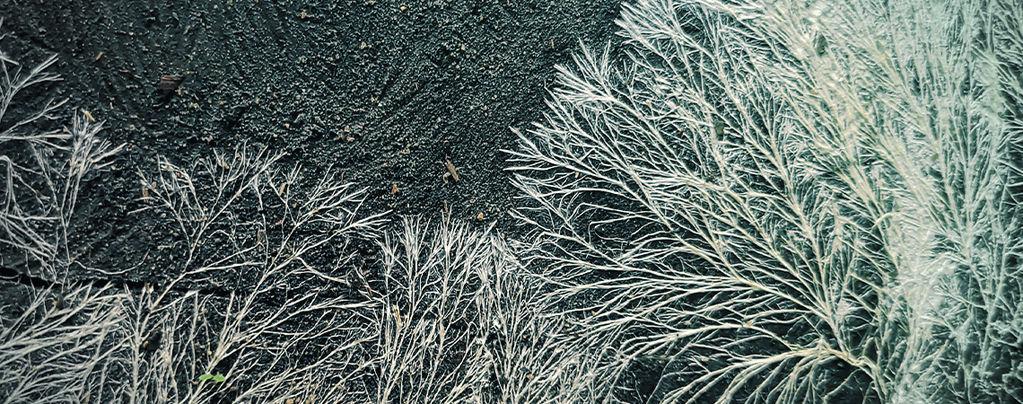 What Is Mycelium?