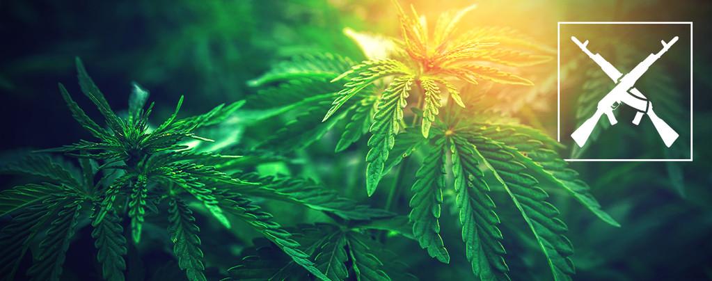 AK-47 Cannabis Sorten