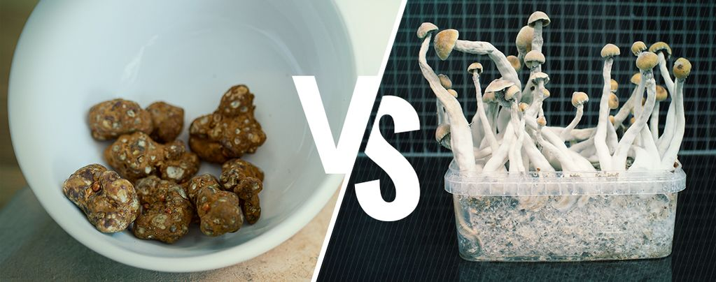 Difference Between Magic Truffles And Magic Mushrooms