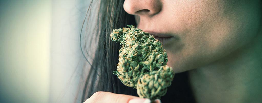 Eliminate Cannabis Odour