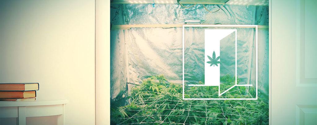 Come Coltivare Cannabis Nell'Armadio