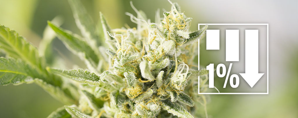 Varietà di Cannabis Sotto 1% THC