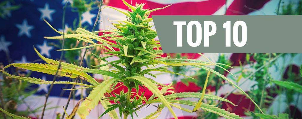 Le Migliori 10 Varietà Di Cannabis Dagli USA