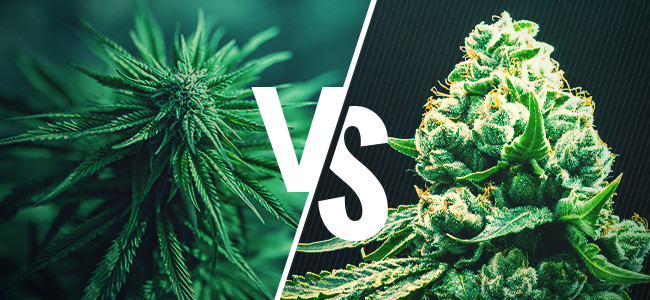 Find The Best Genetics For Your Grow